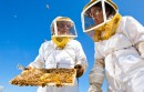 beekeepers with hive