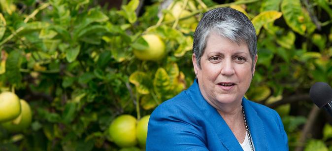 Napolitano in citrus grove