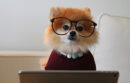Dog dressed like person working at computer