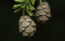 Ornamental pinecones