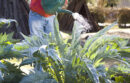 Person watering garden