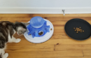 Cat with food puzzle